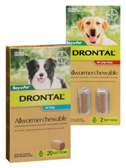 Drontal Allwormer for Dogs