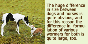 horse wormer for dogs