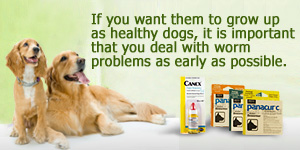 best puppy wormers