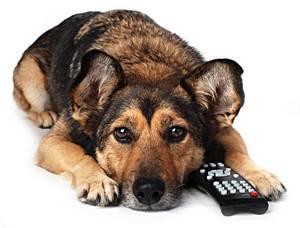 petcyclopedia dog ears and cat ears