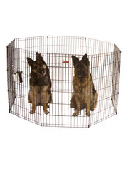 Standard Exercise Pen