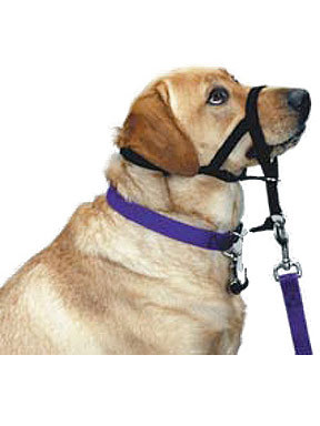 Pet Edge Halti Headcollar