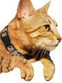 Kakadu Pet Aztec Collar