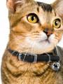 Kakadu Pet Tinker Bell Nylon/Elastic Collar