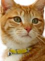 Kakadu Pet Patent Pet Leather Collar
