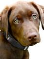 Kakadu Pet Run Scotty Run Decorative Leather Collar