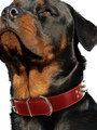 Kakadu Pet Punk Pooch Studded Leather Collar