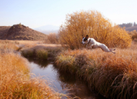Dog Training Jump