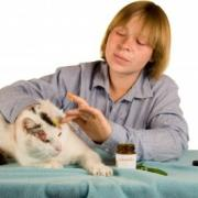 Treating Ringworm in Cats